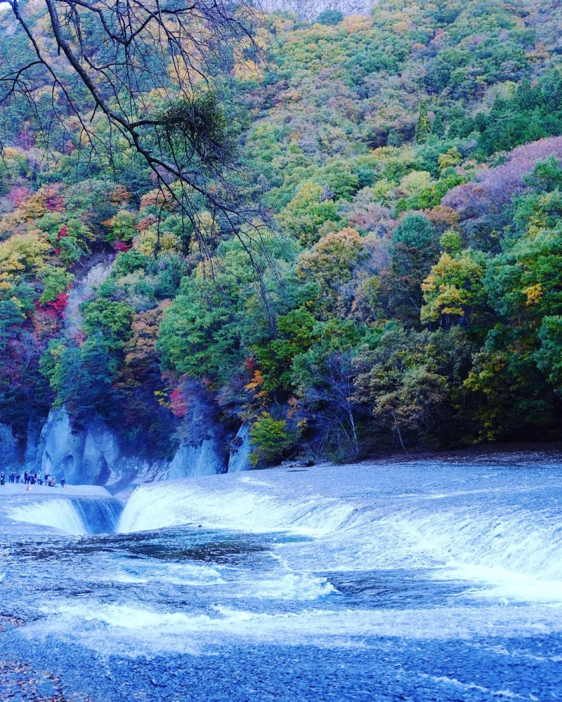 Travel to Lavender Park & Waterfall in Gunma Group (Semi Private) Tour