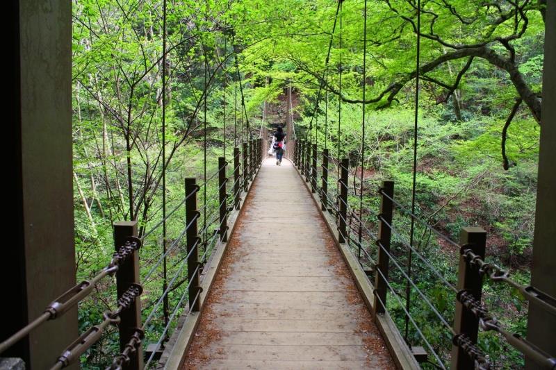 Suspension bridge on the trail