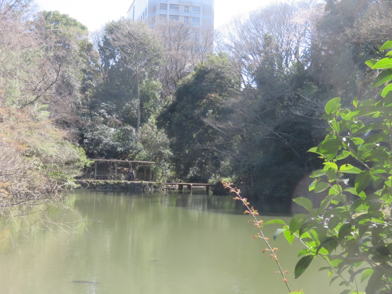 Sanshiro pond. 