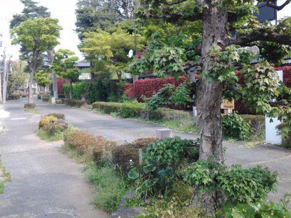Bonsai village