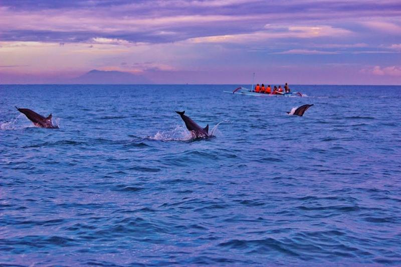 Sunrise Lovina Dolphin