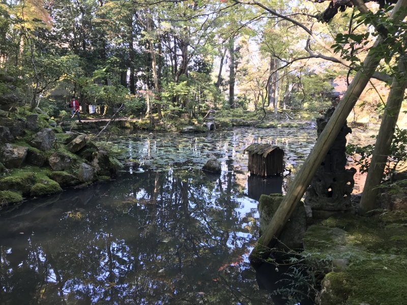 Serenity's Japanese Garden