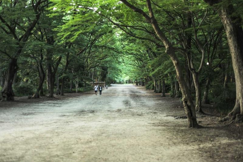 Shimogamo Shrine Forest