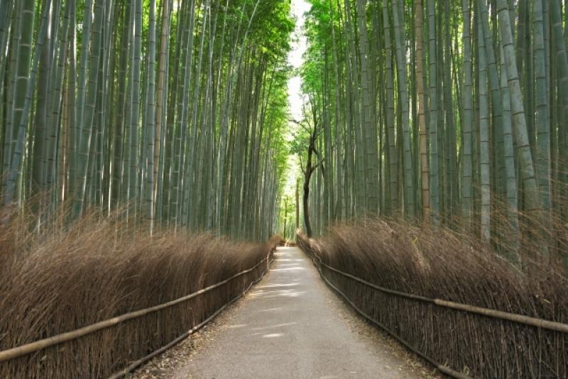 Kyoto-Kinkakuji, Tenryuji, Ninnaji, Arashiyama Bamboo Forest