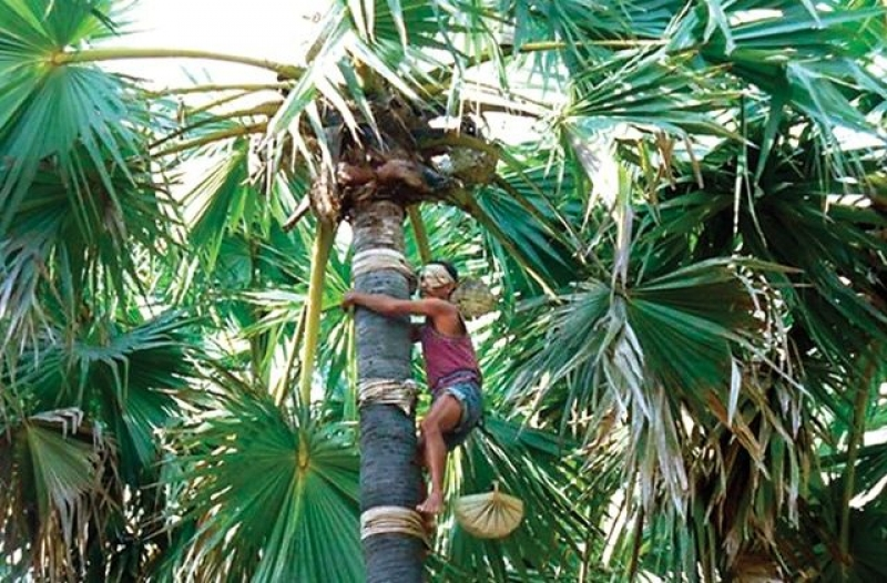 Lontar Palm Wine Making - Flores Style Friendship Drink