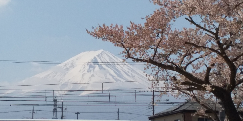 Online - Consulting service for Japan trip