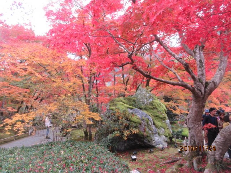 Kyoto in late November