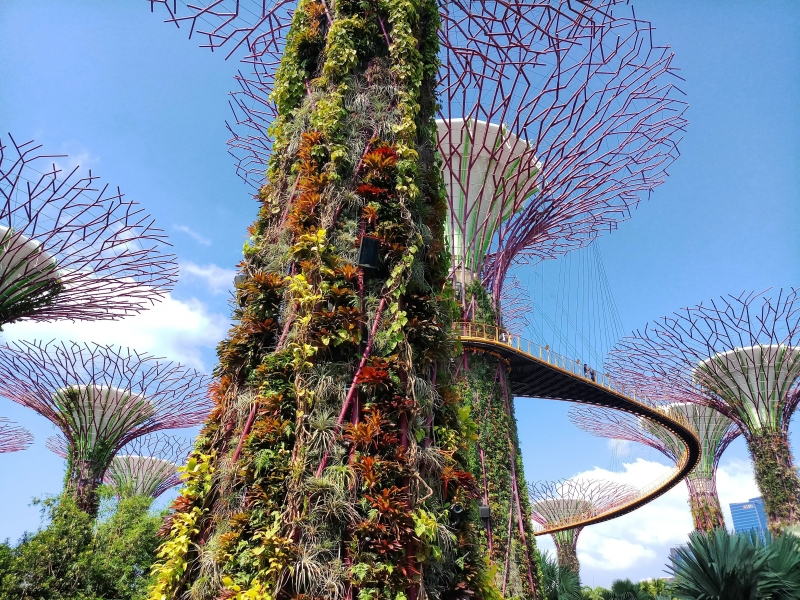 Avatar-like skywalk at Gardens by the Bay