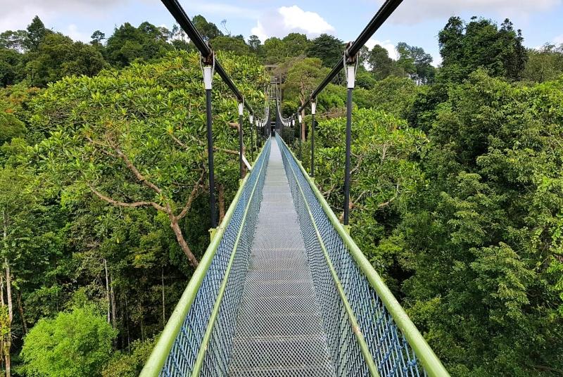 Atop the Treetop Walk suspension bridge