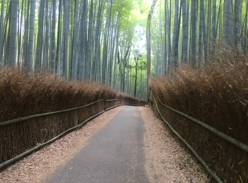 The Bamboo Grove on a quiet day