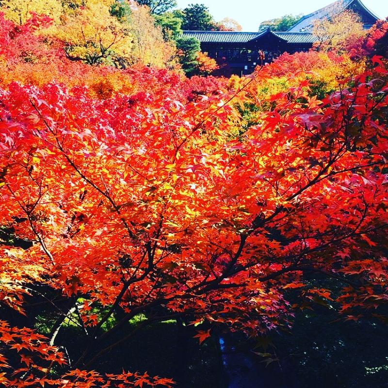 Fall colors at Tofukuji Temple