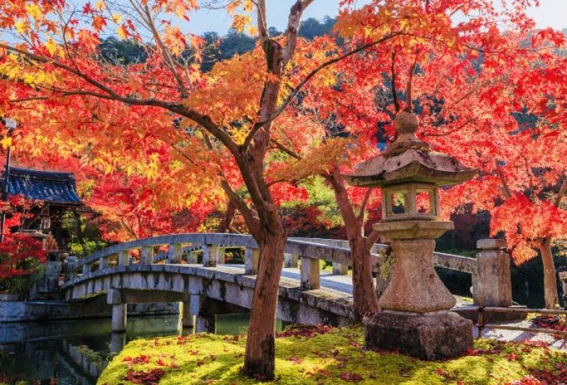 Fall colors at Eikando Temple