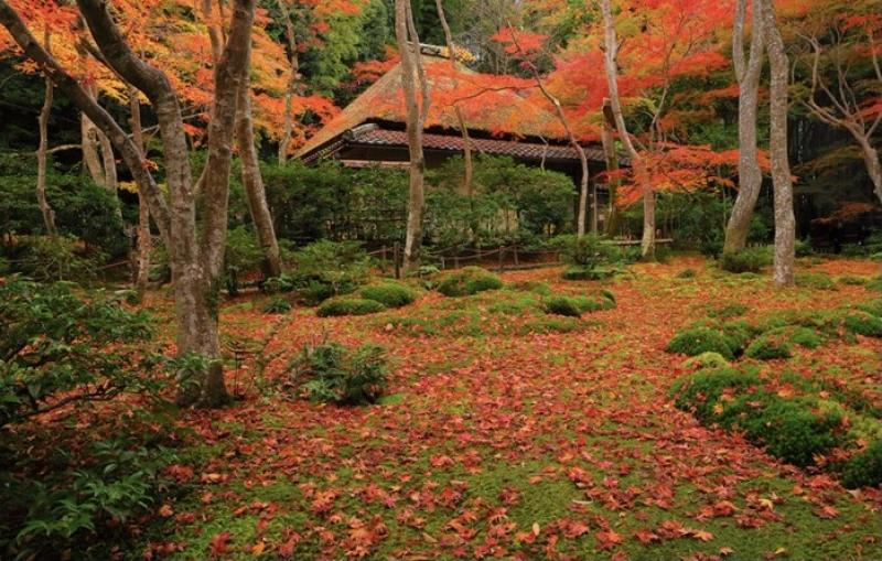 Fall colors at Gioji Temple in Arashiyama area
