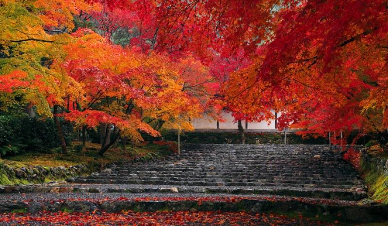 Fall colors at Nisonin Temple in Arashiyama area