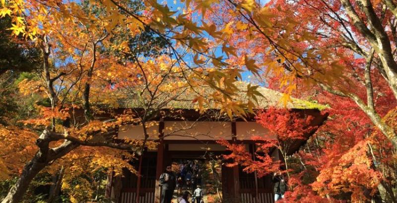 Fall colors at Jojakkoji Temple in Arashiyama area