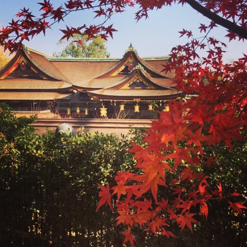 The main shrine sanctuary of Kitano Tenmangu Shrine with Fall colors