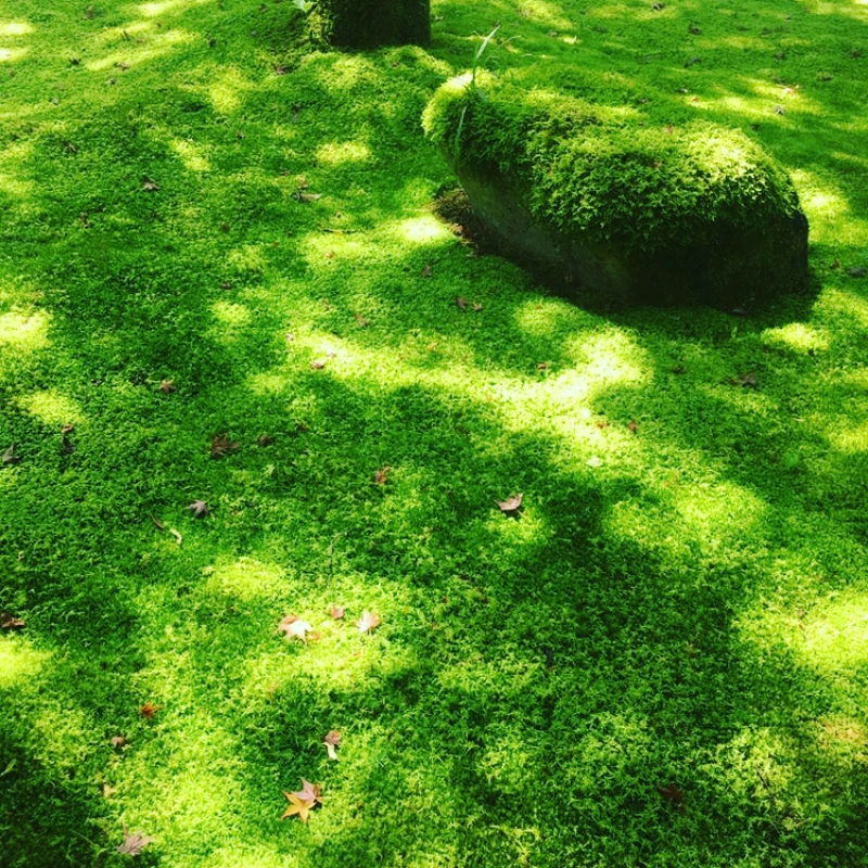 Moss garden at Saihoji Temple(Kokedera)