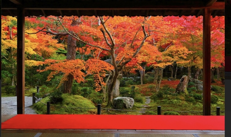 Fall Color scenery like a picture at Enkoji Temple