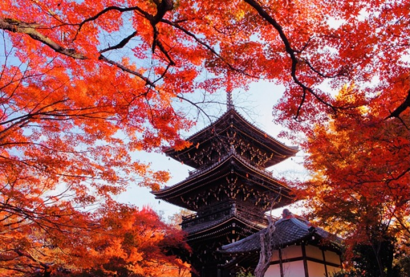 Fall colors at Shinnyodo Temple