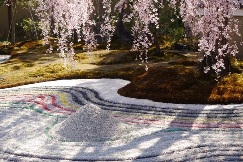 Cherry blossom and Zen style garden at Kodaiji Temple