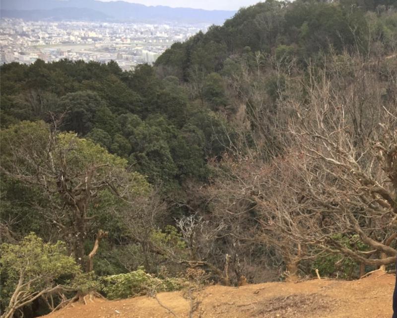 Kyoto, Nara: Semi-Wild Animal Full-Day Unique Experience