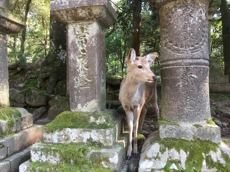 Expérience Animaux Mi-Sauvages d'une Journée à Kyoto et Nara