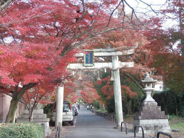 .The approach to Saginomori Shrine is lined with crimson leaves