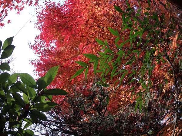 the autumn foliage