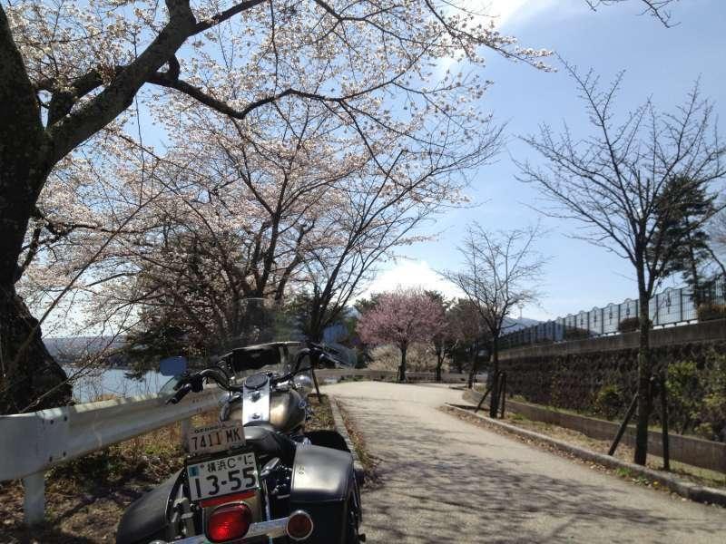 Cherry blossoms tunnel by Kawaguchiko lake
