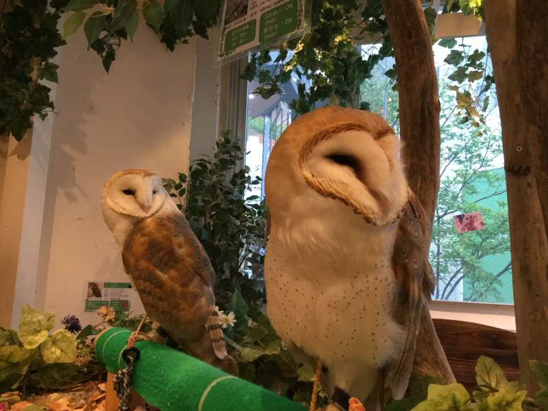 S3.Harajuku/Shibuya (Owl cafe, optional)