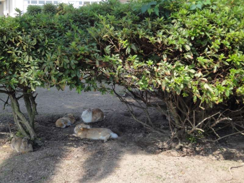 Rabbits are taking a nap in the shade of the tree.