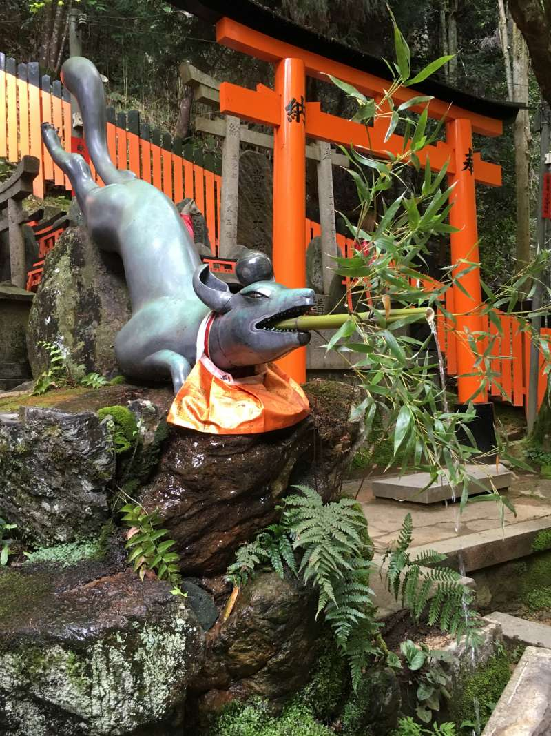 so acrobatic stone fox(devine messenger)