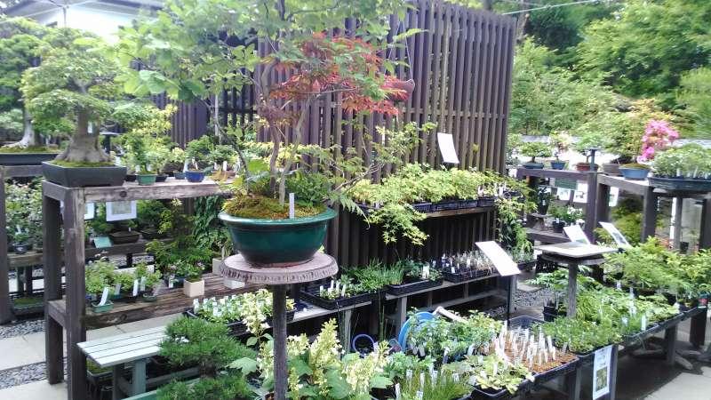 one of Bonsai nurseries.