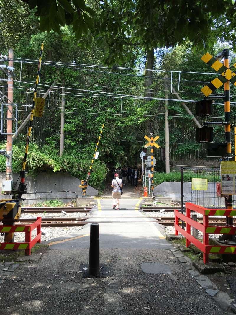 The railway of Sagano Romantic Train is cutting across the bamboo grove.