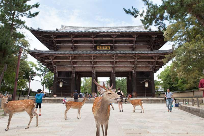 The South Great Gate to Todaiji Temple and several deer