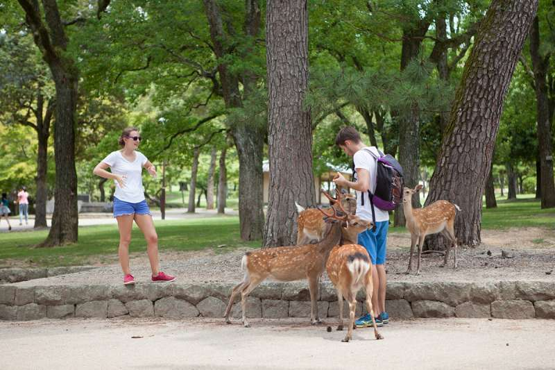 Nara Park and several deer