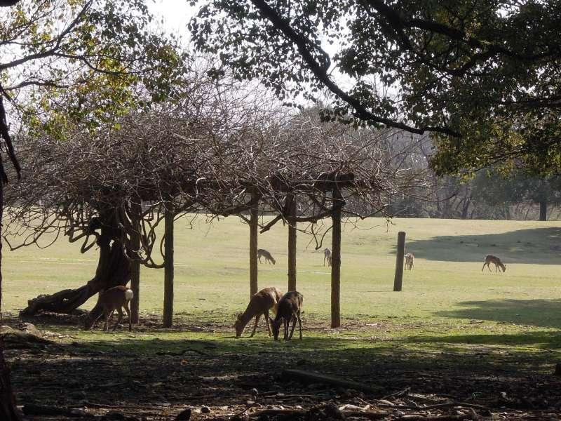 At Nara Park