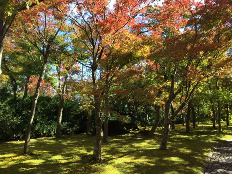 Option#C. Hakone Museum (The moss garden) in Autumn color
