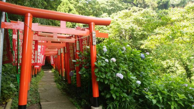 Sasukeinarijinja Shrine was dedicated to the God of a bountiful harvest and success in business.