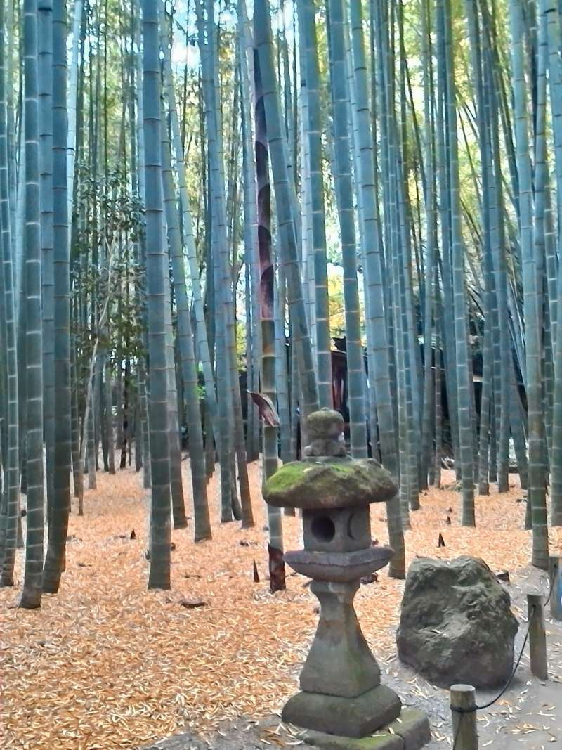 Hokokuji Temple with a peaceful bamboo garden