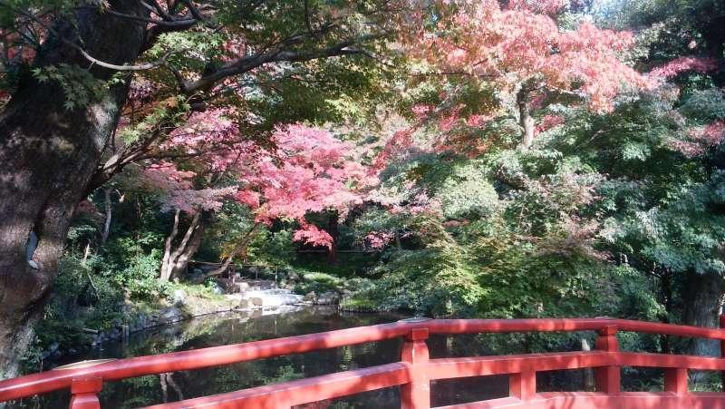 Autumn colored leaves in Tsurugaokahachimangu Shrine.