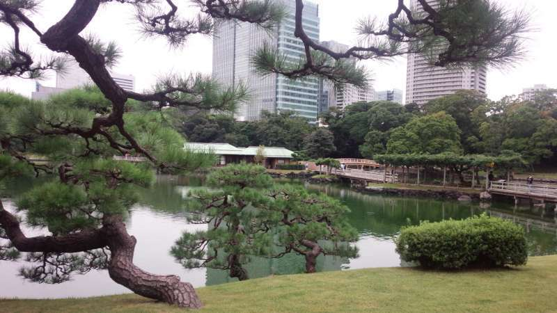 Hama Rikyu Garden that used to be owned by the Tokugawa Shogun in the Edo period.  You can find Hama-rikyu garden a perfectly comfortable oasis in the center of Tokyo.