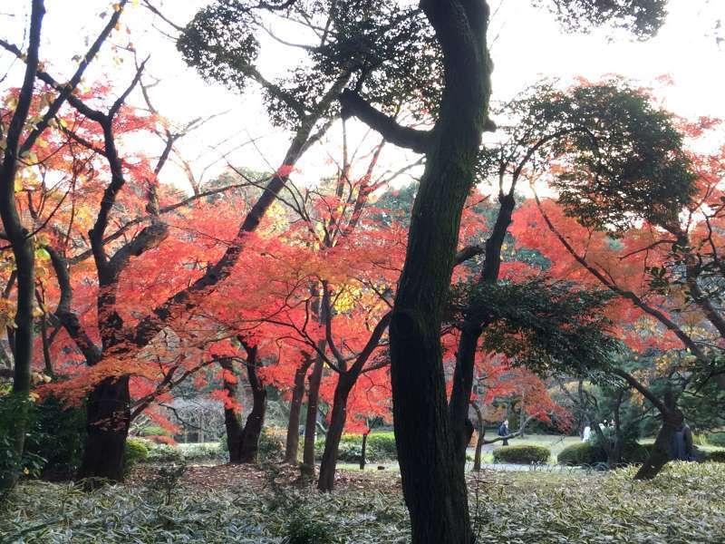 Shinjuku gyoen garden 2015-12-12