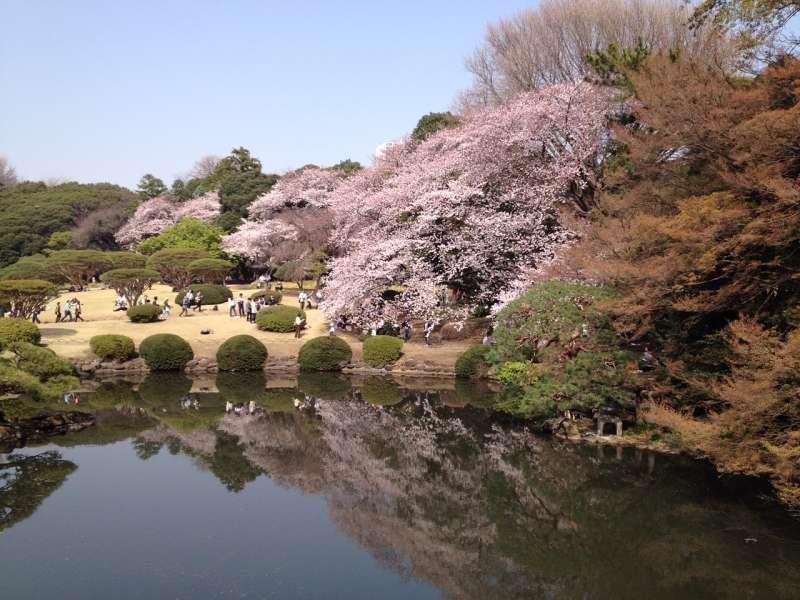 Shinjukugyoen garden 2015-3-30