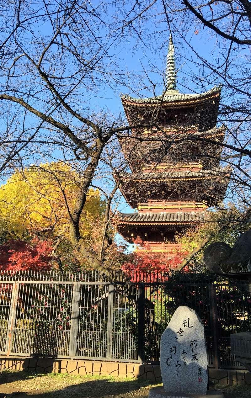 Ueno park 2015-12-4