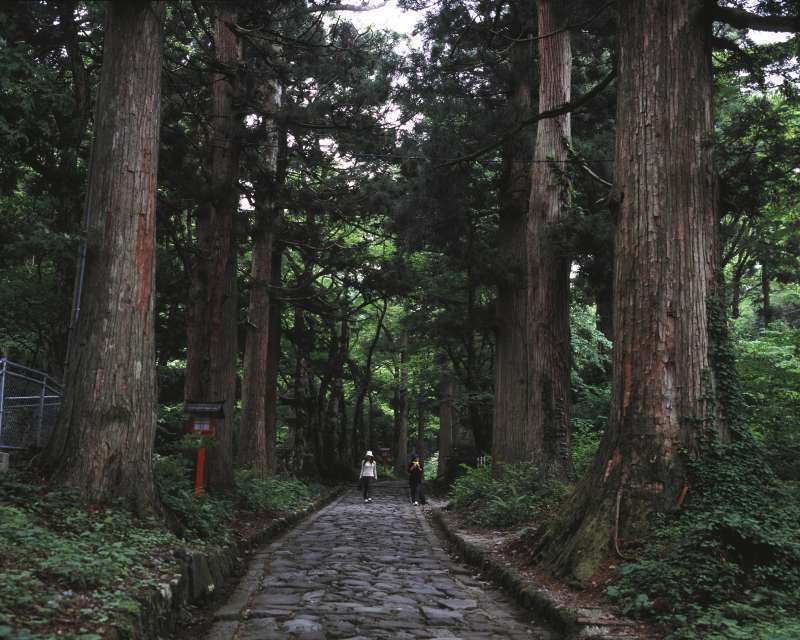 The first section of the trail leads through thick beech forests which have the largest scale in Western Japan.